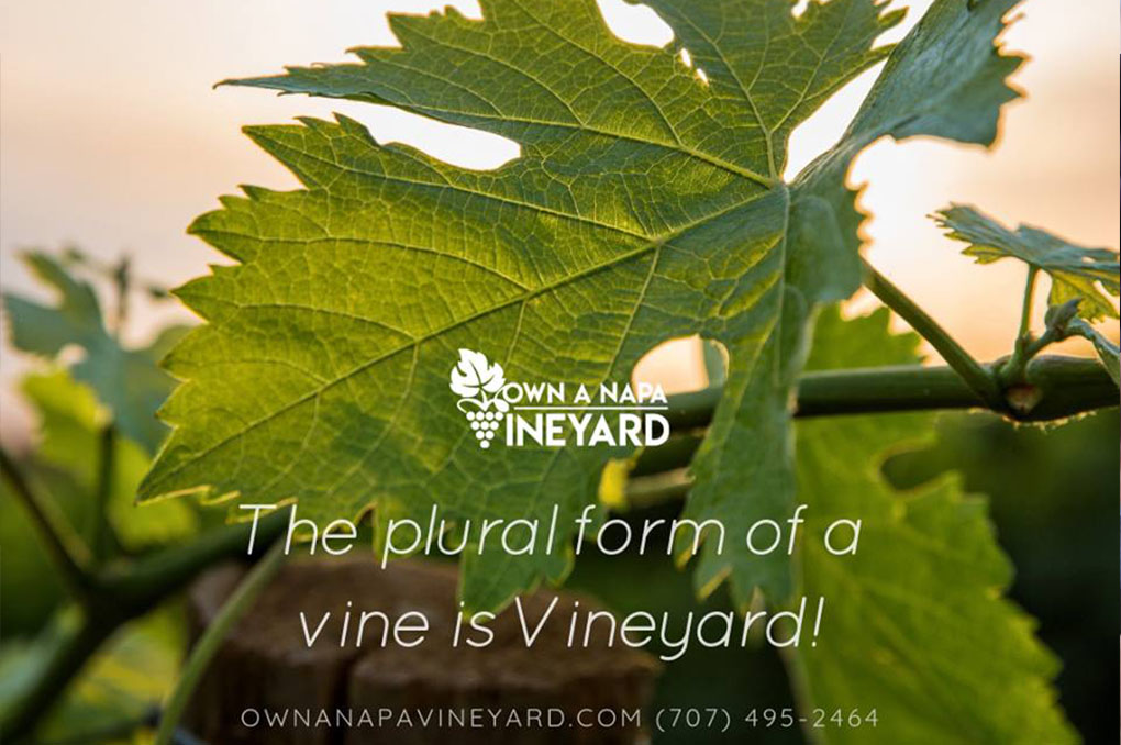 Dreaming of owning a vineyard?